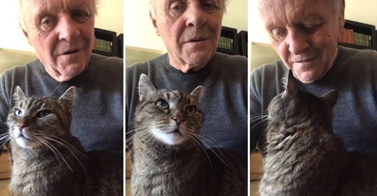 Anthony Hopkins joue du piano pour son chat pendant qu'il est en quarantaine,